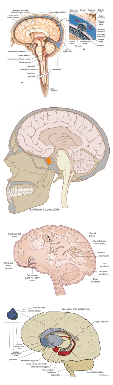 anatomical_to_diagrammatic_human_brain_page1