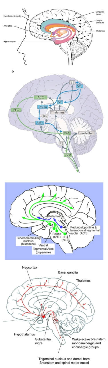 anatomical_to_diagrammatic_human_brain_page2