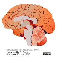 human_brain_gallery_image1-22Jan18