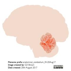 human_brain_gallery_image3-22Jan18