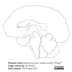 human_brain_gallery_image5-22Jan18