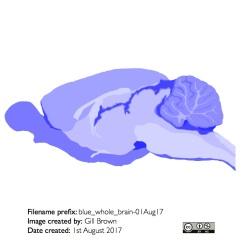 rat_brain_gallery_image11-22Jan18