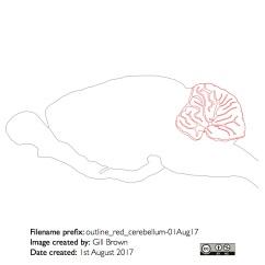 rat_brain_gallery_image15-22Jan18