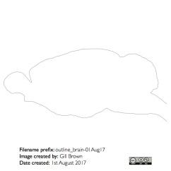 rat_brain_gallery_image3-22Jan18