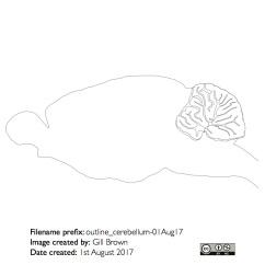 rat_brain_gallery_image5-22Jan18
