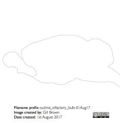 rat_brain_gallery_image7-22Jan18