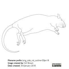 lying_side_rat_outline-03Jan18
