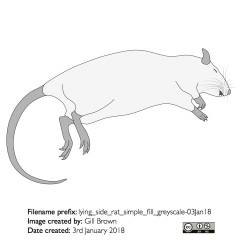 lying_side_rat_simple_fill_greyscale-03Jan18