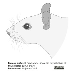 rat_head_profile_simple_fill_greyscale-05Jan18
