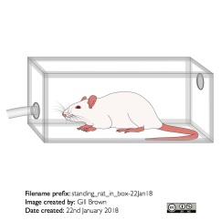 standing_rat_in_box-22Jan18