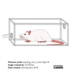 standing_rat_in_box-22Jan18