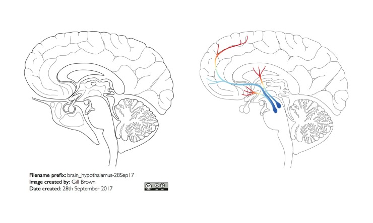 dopamine_pathway_header_image_24Nov18
